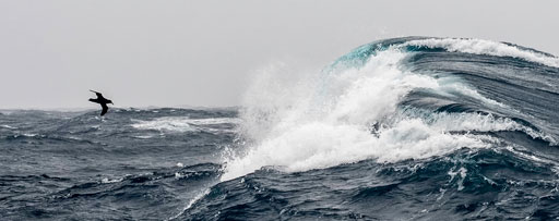 Huge wave, small bird – Drake passage