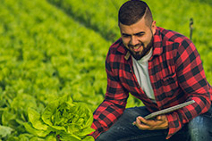 Man holding a lettuce and using a digital tablet inside a greenhouse