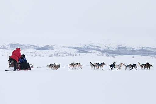 Huskies pulling a sled along in the snow
