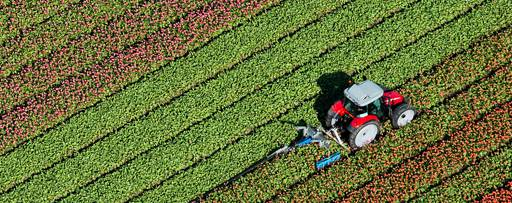 Tractor in a tulip field in the Netherlands