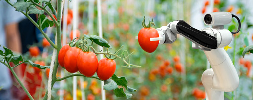 Robotic arm holding a tomato