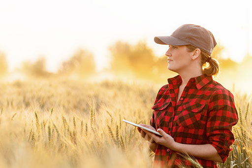 Female farmer in wheat field with smart device