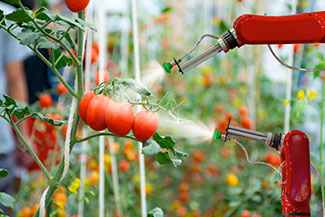Close up of robotic arm in tomatoes