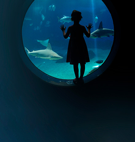 Young girl looking into an aquarium