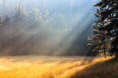 Rays of sunlight in a field