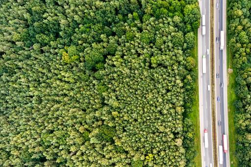 highway in the middle of forest