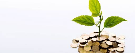 plant grown from coins