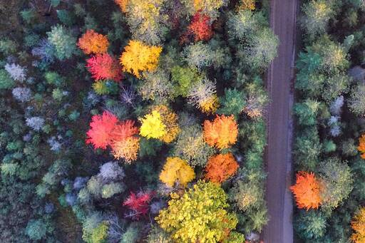 aerial view colourful trees
