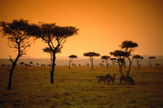Kenya savanna sunset
