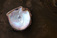 Oyster protecting a valuable Pearl on a rich wood background