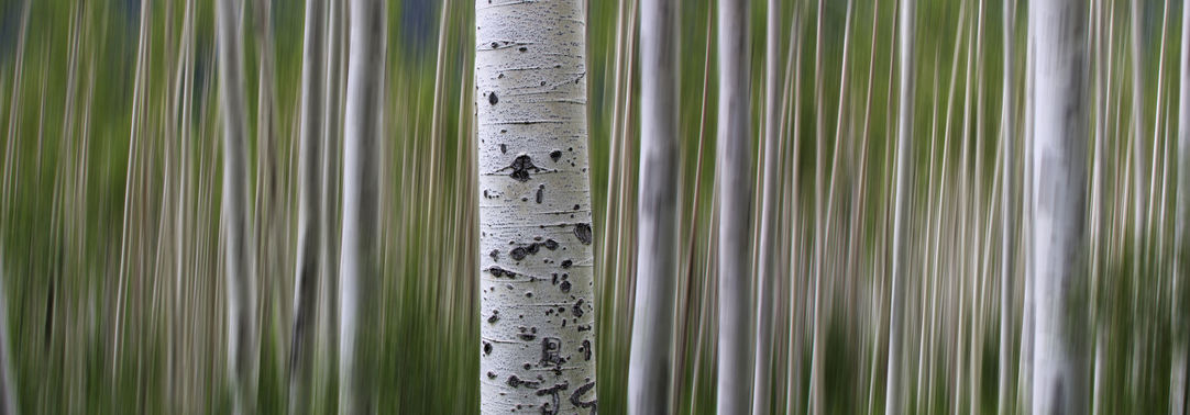 Close view of a bark
