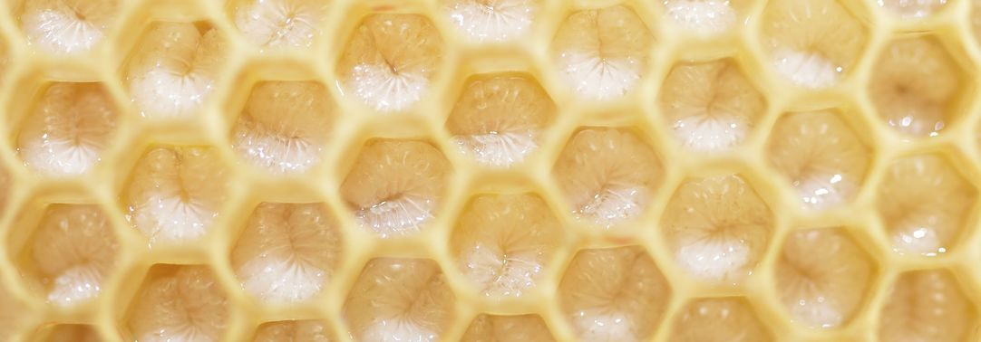close view honeycomb