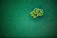 tree in a green field
