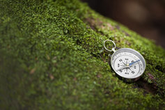 Tree and Compass