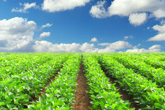 Innovation and trends in Agribusiness