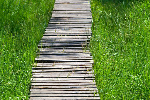 Wooden foot path with green grass