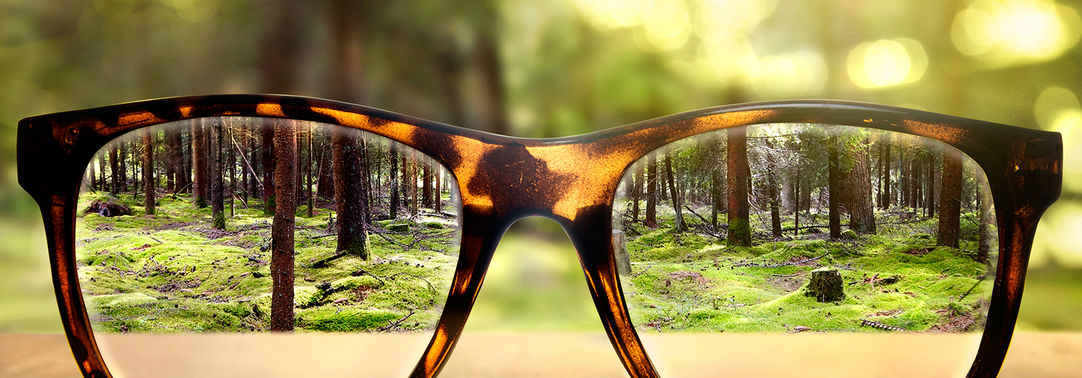 glasses in forest