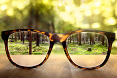 Glasses on the table bringing forest into view