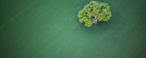 hu-oak-tree-in-green-field-nature