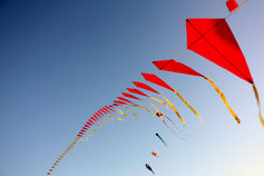 A kite hovering in the air
