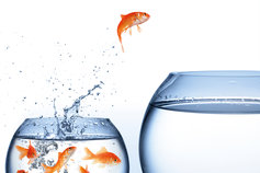 fish jumping from one fish bowl to another