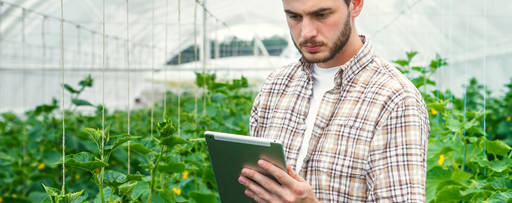 Young man working in a greenhouse using tablet
