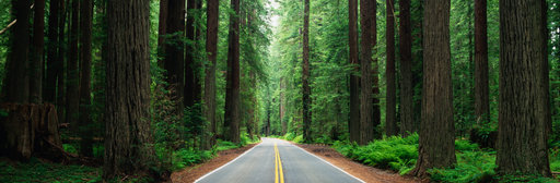 road-in-forest