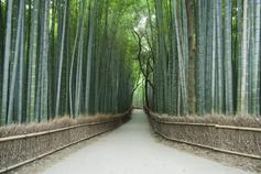 avenue of bamboo