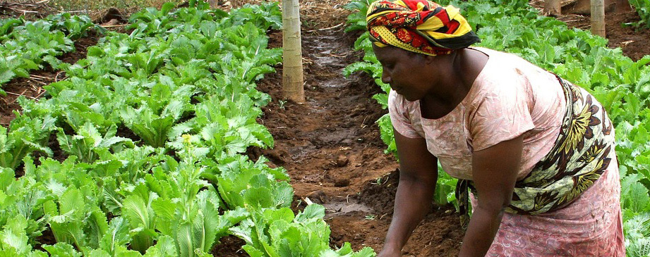 Making it Happen: Conservation of Agriculture in Africa