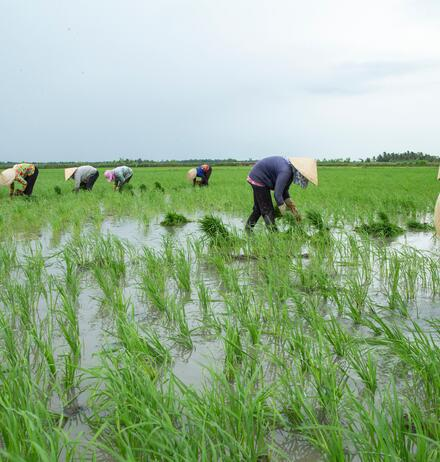 Rice Industry Review