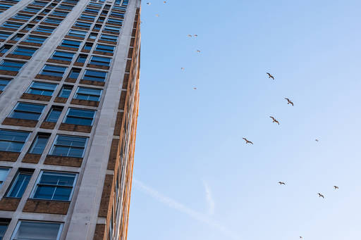 birds and tower block
