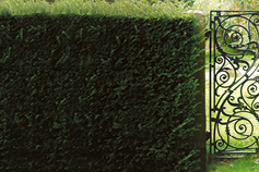 Superfunds: New solutions for Defined Benefit pension plans - photo of a hedge and gate