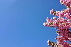 Pensions accounting, assurance and regulatory round-up - Pink flowers