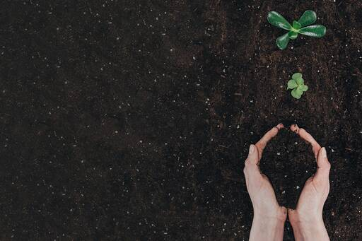 2019 Change Readiness Index - Hands  gathering earth near plant