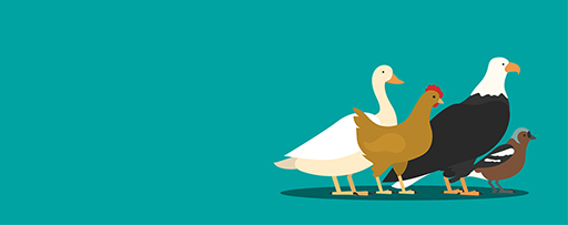 Planning, budgeting and forecasting maturity assessment - birds illustration