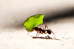 A view on tax implications - It's decision time in Wealth Management- ant-with-green-leaf