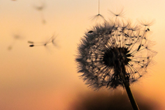 10 conversations about operational resilience - Dandelion