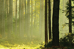 Davos 2020 - ESG - why act now? - Forest