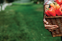 Man carrying tomatoes