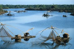 Bamboo nets on the river