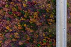 Aerial view of car over bridge surrounded by multi colour trees in forest