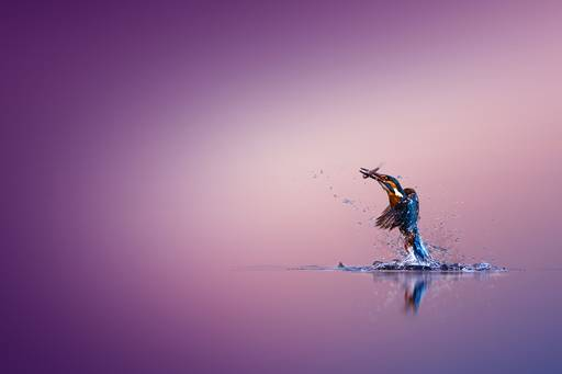 Kingfisher flying out of water with a fish in its mouth