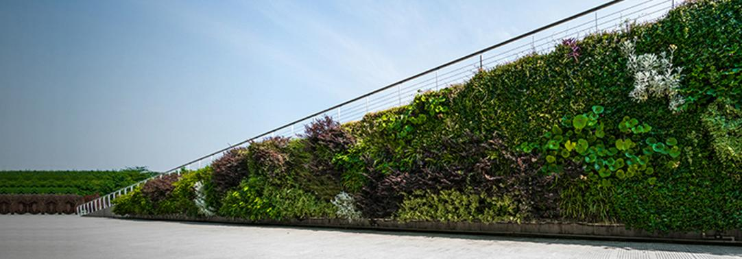 Green plants vertically planted on the boundary wall