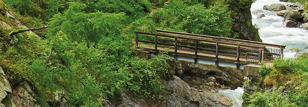 Wooden bridge over river in a forest