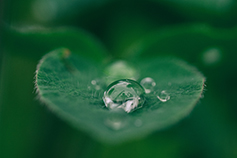 Water-drops-on-green-leaf