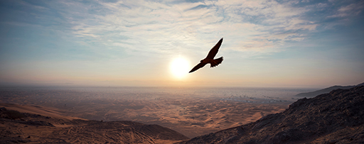 Bird flying over a desert in scorching heat of sun