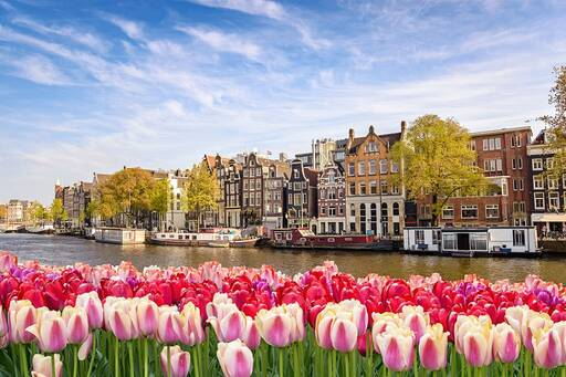 Amsterdam city skyline at canal waterfront with pink spring tulip flowers.