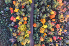 Top view of road passing through dense colourful trees
