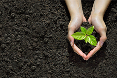 Hands holding green sapling in dark soil