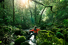 Man wearing red jacket sitting in a dense green forest, looking up at sunlight